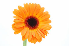 orange de fleur Photos stock