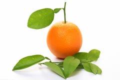 orange de fruit Photo libre de droits