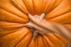 Orange de potiron potirons avec l'espace de copie d'automne Photographie stock libre de droits