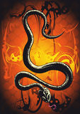 Orange de serpent Image libre de droits
