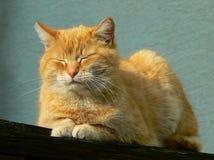Orange de sommeil Photographie stock libre de droits