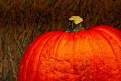 Orange de tige de potiron sur le légume Aut de contraste de fond de contreplaqué Images libres de droits