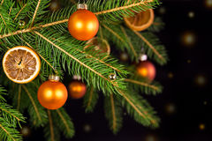 Orange decoration on a tree Royalty Free Stock Photo