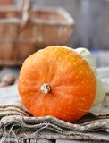Orange decorative pumpkin Royalty Free Stock Image