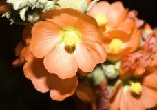 Orange desert flower stock photo