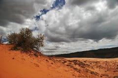 Orange desert under gloomy sky Royalty Free Stock Photography