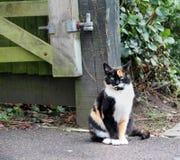 Orange die Katze der getigerten Katze Lizenzfreies Stockbild