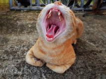 Orange Domestic Cat Yawning Wide Mouth Open Showing Teeth and Tongue. Close-up Orange Domestic Cat Yawning Wide Mouth Open Showing Teeth and Tongue royalty free stock image
