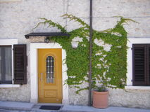 Orange door with Ivy Stock Image