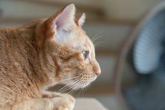 Orange draußen schauen der Katze stockbilder