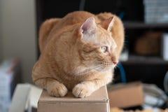 Orange draußen schauen der Katze lizenzfreie stockfotos