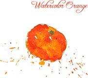Orange drawing by watercolor Stock Images