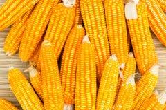 Orange dried corn background for animal feeding Stock Photography