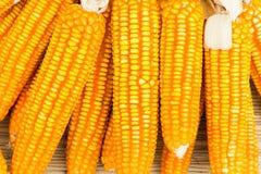 Orange dried corn background for animal feeding Stock Photo