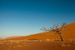 Orange dune in Namib Stock Image