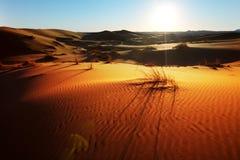 Sahara desert. Orange dunes of the Sahara desert Royalty Free Stock Photo