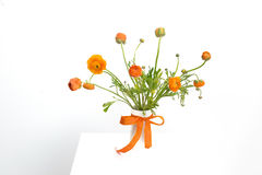 Orange Dutch Flowers Royalty Free Stock Photos