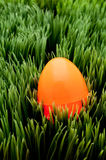An orange Easter egg on green grass Royalty Free Stock Image