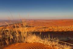 Orange Elim dune at Sossusvlei Royalty Free Stock Photos