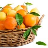Orange Endenzitronen Stockfotos