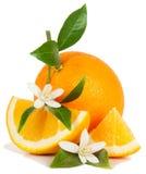 Orange et fleur photo libre de droits