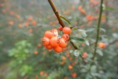 Orange et vert Photos libres de droits