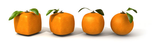 Orange evolution Royalty Free Stock Images