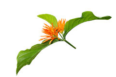 Orange exotic flower Royalty Free Stock Photography