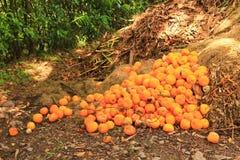 Orange explosion. San Lorenzo Ravine - Salta Province - Argentina Royalty Free Stock Image