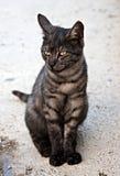 Orange eye cat Stock Images