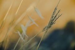 Orange fält för äng Arkivbild