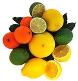 orange för grapefruktcitronlimefrukt Royaltyfri Bild