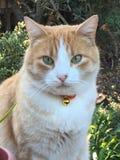 orange för 2 katt Arkivbild