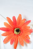 Orange fabric daisy on white linen Royalty Free Stock Photography