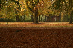 Orange fall. Beautifully fall in sweden park Royalty Free Stock Images