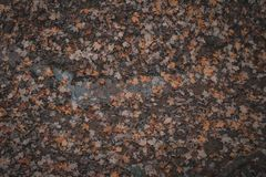Fall leaves on mud background royalty free stock images