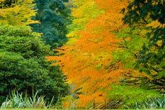 Orange fall canopy Stock Photo
