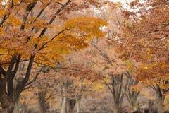 Orange fall colors Stock Photo