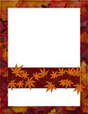 Orange Fall Frame for your message or invitation Royalty Free Stock Photos