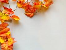 Orange Autumn Leaf Frame royalty free stock image