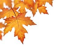 Free Orange Fall Leaves Border Stock Photography - 44348462