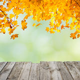Orange fall leaves over wooden desk Royalty Free Stock Photo