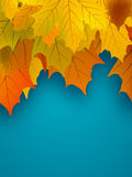 Orange fall maple foliage. EPS 8 Royalty Free Stock Photos