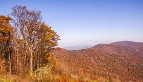 Orange fall. Fall overlook of Shenandoah National Park Royalty Free Stock Photo