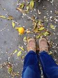 Orange fall after rain day Stock Image
