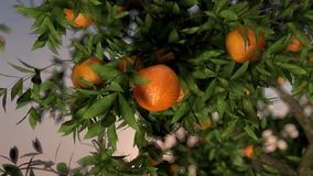 Orange Fallen stock video