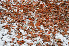 Orange fallen leaves Royalty Free Stock Images