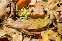 Orange fallen leaves lying on the ground. Stock Image