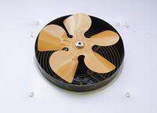 Orange Fan Stock Images