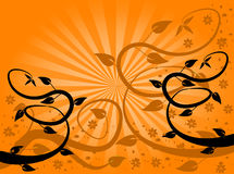 Orange Fan Floral Background Royalty Free Stock Image